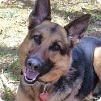Adopt A Pet :: Referral - Dakota - Denver, CO