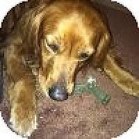 Adopt A Pet :: Banner - Yorktown, VA