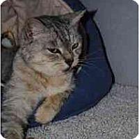 Adopt A Pet :: Cupid - Marietta, GA