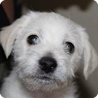 Adopt A Pet :: Kai - Scottsdale, AZ