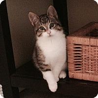Adopt A Pet :: Karmen - Douglas, ON
