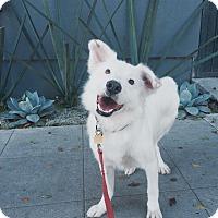 Adopt A Pet :: Jasper - Orange, CA