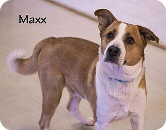 Shepherd (Unknown Type)/Husky Mix Dog for adoption in Valparaiso, Indiana - Maxx