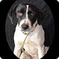 Adopt A Pet :: Opal - Huntsville, TN