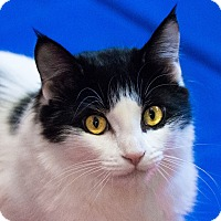 Adopt A Pet :: Celine - Calgary, AB