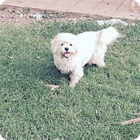 Adopt A Pet :: Duffy - san Antonio, TX