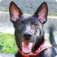 Adopt A Pet :: Haddie - San Francisco, CA