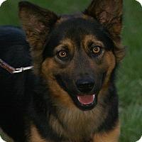 Adopt A Pet :: Pharaoh - Hawk Point, MO