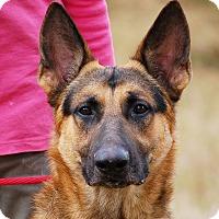 Adopt A Pet :: Nick AD 01-09-16 - Preston, CT