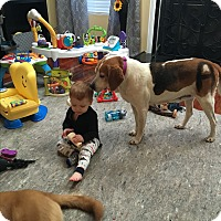 Adopt A Pet :: Annie Grace - Virginia Beach, VA