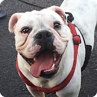 Adopt A Pet :: Ana - Miami, FL
