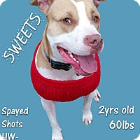 Adopt A Pet :: Sweets - Houston, TX