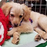Adopt A Pet :: Clay - San Diego, CA