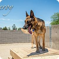 Adopt A Pet :: LEROY - Phoenix, AZ