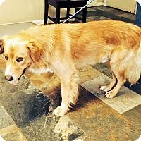 Adopt A Pet :: Riker - BIRMINGHAM, AL