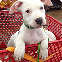 Adopt A Pet :: Bordentown, NJ - Eddard (Ned) - New Jersey, NJ