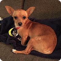 Adopt A Pet :: Jillian - Denver, CO