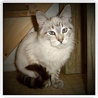 Adopt A Pet :: BAXTER - Medford, WI