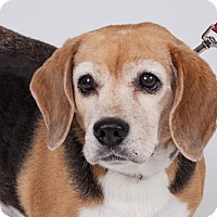 Adopt A Pet :: Betsy - Jupiter, FL