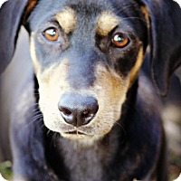 Adopt A Pet :: Jade - Westport, CT
