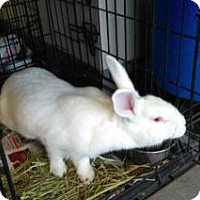 New Zealand Mix for adoption in Lindsay, Ontario - Marjorie