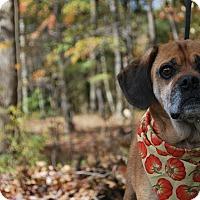 Adopt A Pet :: Duff - New Castle, PA