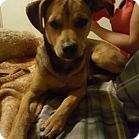 Adopt A Pet :: Crockett - Thousand Oaks, CA