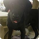 Adopt A Pet :: Magoo
