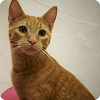 Adopt A Pet :: Sundance-BUTCH's BROTHER - Naperville, IL