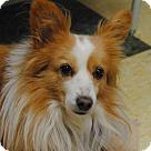 Adopt A Pet :: Washington
