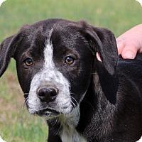 Adopt A Pet :: Liam~adopted! - Glastonbury, CT