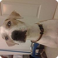 Adopt A Pet :: Delilah - New Orleans, LA