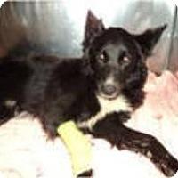 Adopt A Pet :: Bailey - Phelan, CA
