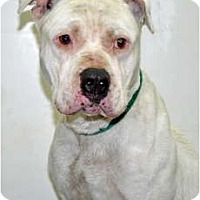 Adopt A Pet :: Riggs - Port Washington, NY