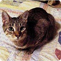 Adopt A Pet :: Aiden - Chesapeake, VA