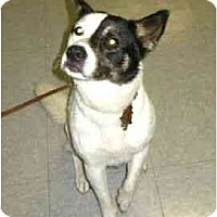 Adopt A Pet :: Sundae - Kingwood, TX