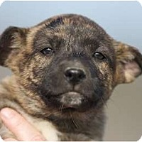 Adopt A Pet :: Tinsel - Providence, RI