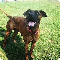 Adopt A Pet :: Jade - Morgantown, WV