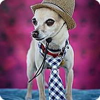 Adopt A Pet :: BRAD - West Hollywood, CA