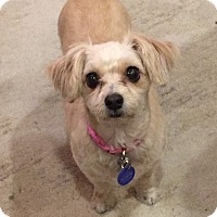Adopt A Pet :: Clara - Los Angeles, CA
