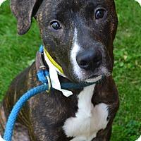 Adopt A Pet :: Vito - Toledo, OH