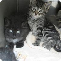 Adopt A Pet :: Nova - Athens, GA