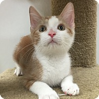 Adopt A Pet :: Wayne - Mission Viejo, CA