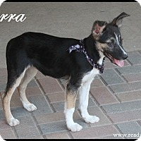 Adopt A Pet :: Sierra - Rockwall, TX