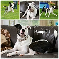 Adopt A Pet :: Hampton - Sioux Falls, SD