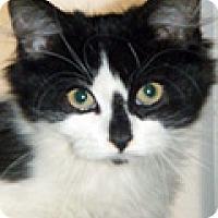 Adopt A Pet :: Fluff - Durham, NC