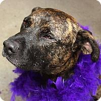 Adopt A Pet :: Maxine - Detroit, MI