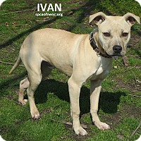 Adopt A Pet :: Ivan - Elizabeth City, NC
