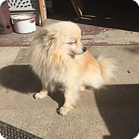 Adopt A Pet :: Frankie - El Sobrante, CA