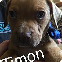 Adopt A Pet :: Timon - Charlotte, NC
